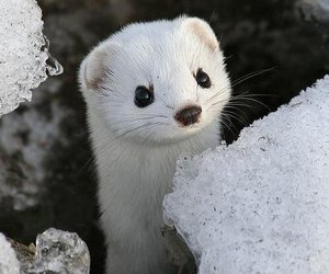 cute, animal, and white image
