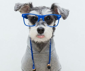 dog, glasses, and geek image