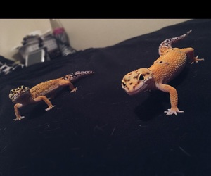 bitches, geckos, and cute image