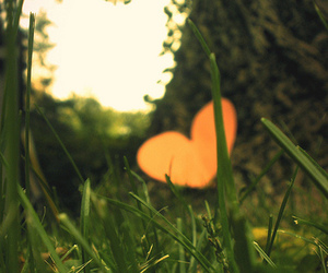 beauty, grass, and heart image