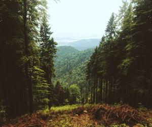 beautiful, freedom, and nature image