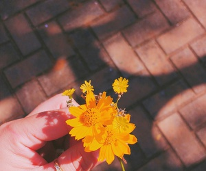 flor, yello, and flower image