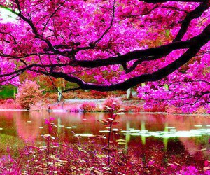beautiful, colors, and pink image