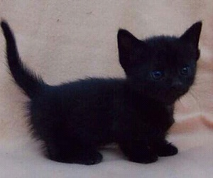 adorable, baby animals, and black image