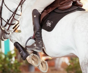 horse, jump, and riding image