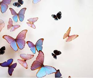 butterfly, animal, and fly image