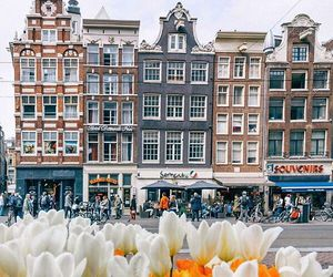 amsterdam, flowers, and city image