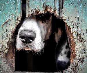 dog and photography image
