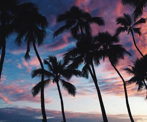 palms, summer, and sunset image