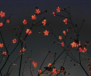 flowers, tumblr, and night image