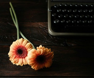 daisy, gerbera, and light image
