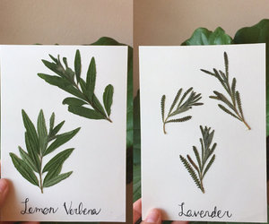 etsy, pressed leaves, and flower botanical image