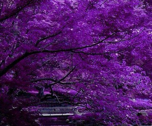 purple and nature image