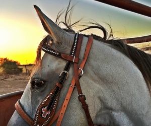 caballos, rancho, and yegua image