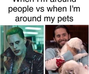 animals, pets, and comic image