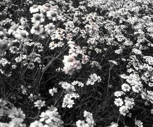 black, flover, and summer image