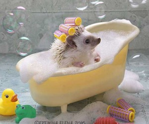 bath, hedgehog, and cute image