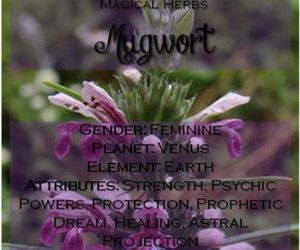 herbalism, green witchcraft, and magical herbs image