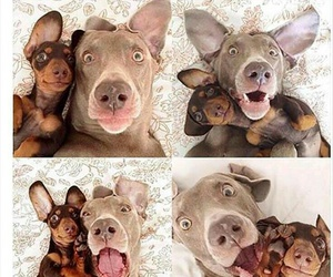 dog, funny, and selfies image