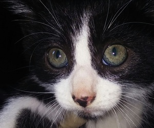 animal, cute., and cats image