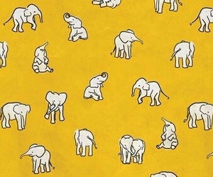 elephant, header, and mustard image