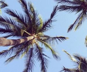 beach, blue sky, and palm image
