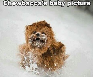 chewbacca, funny, and baby image