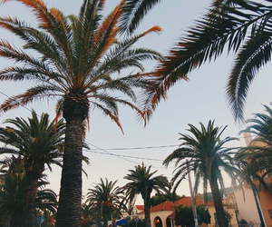 Greece, palms, and vacation image