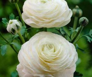 Dream, english garden, and garden image