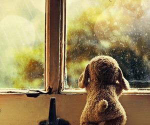 window, rain, and bear image