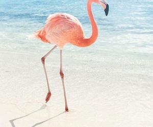 flamingo, beach, and summer image