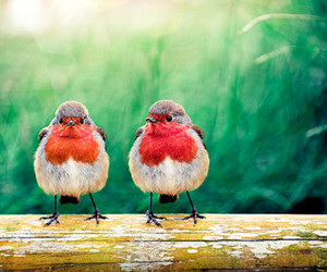birds, colorful, and photography image