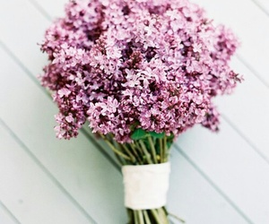 flowers, pink, and lilac image