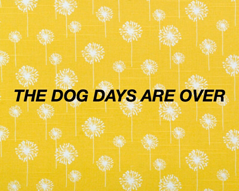 The Dog Days Are Over Via Tumblr On We Heart It
