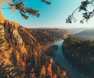 nature, forest, and autumn image