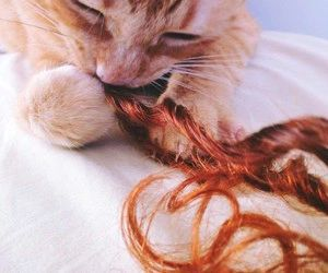 cute, cat, and hair image