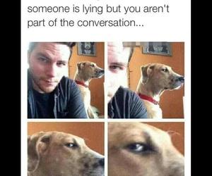 funny, dog, and lying image