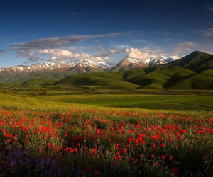 asia, flowers, and kyrgyzstan image