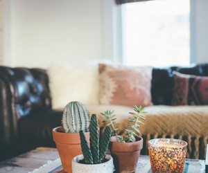 plants, cactus, and home image