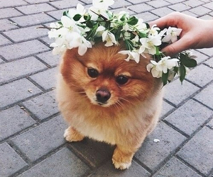dog, cute, and flowers image