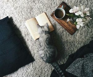 cat and book image
