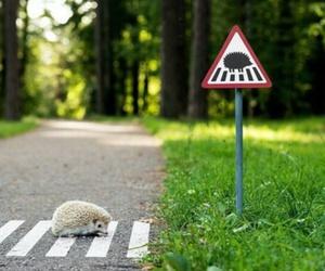 animal, road, and hedgehog image