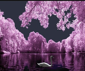 Swan and tree image