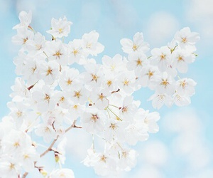 flowers, blue, and pastel image