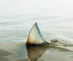 mermaid, fish, and ocean image