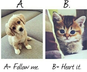 cats, dogs, and follow image