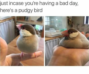 funny, birdie, and lol image