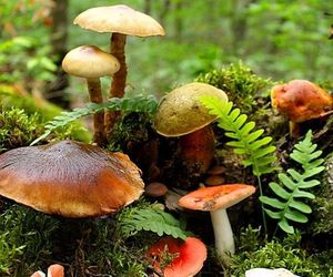 mushroom, forest, and nature image