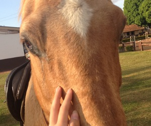 best friend, hand, and horse image