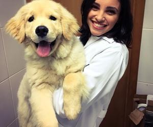 dog, golden retriever, and pretty image